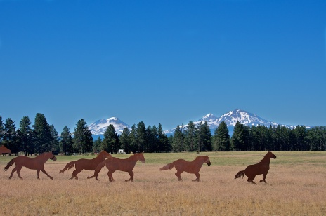 NOT SO WILD HORSES AND THE SISTERS MOUNTAINS