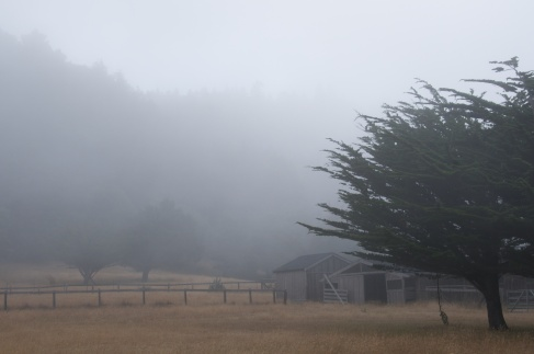 MORNING FOG, MENDOCINO