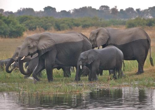 ELEPHANT PRISONERS