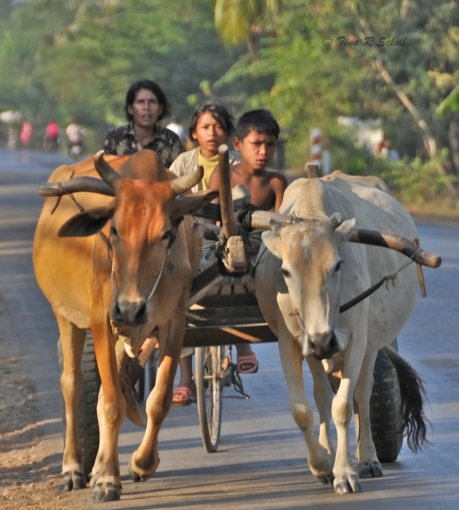 FAMILY TRANSPORTATION, CAMBODIA