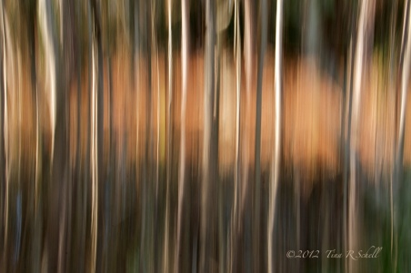 ABSTRACT, TREES IN MOTION, KIAWAH ISLAND