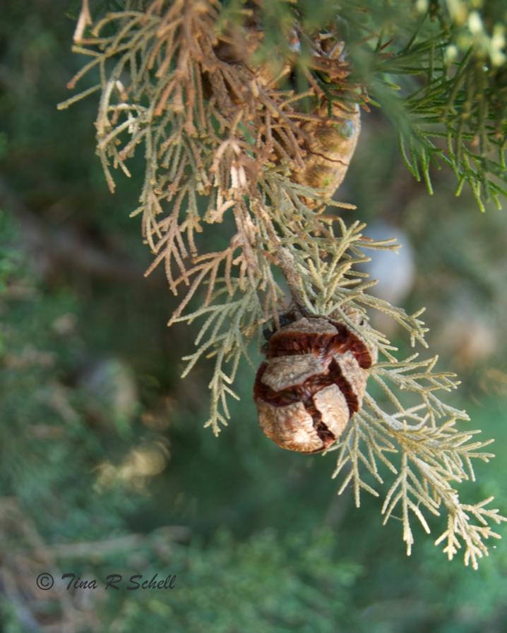 NATURE'S CHRISTMAS GIFT