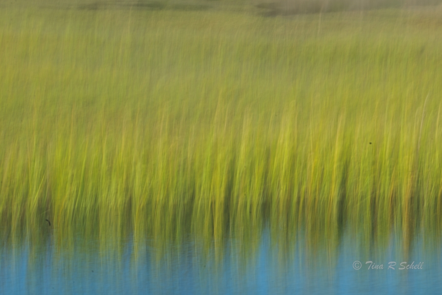 SPRING MARSH ABSTRACT
