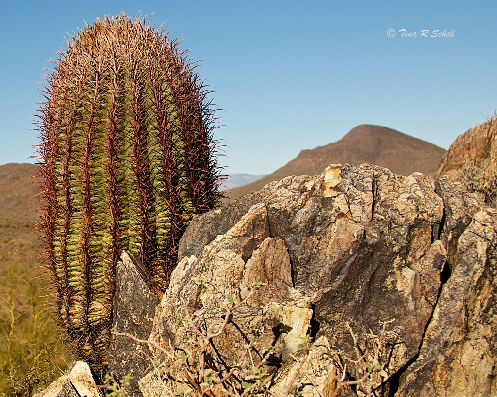 RED CACTUS AND ROCK