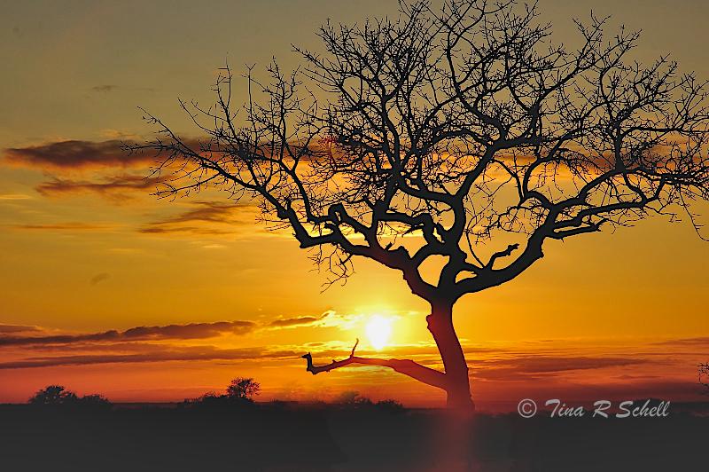 UNDER AFRICAN SKIES, BOTSWANA