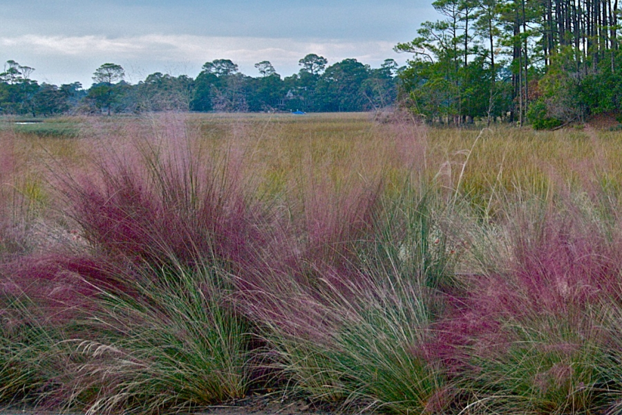 SWEETGRASS ON THE MARSH
