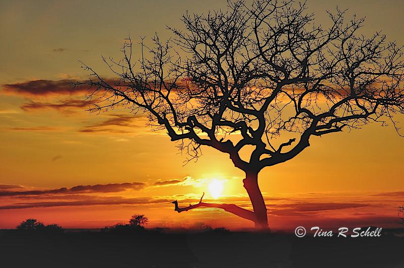 MORNING LIGHT, BOTSWANA