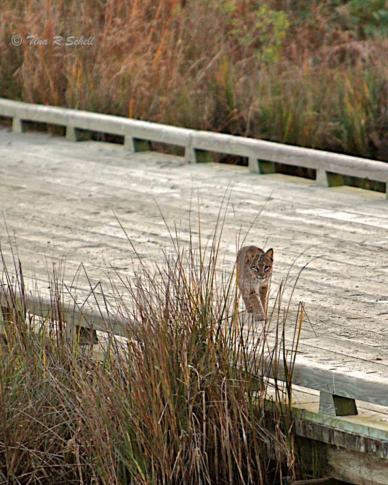 CROSSING LANE, KIAWAH