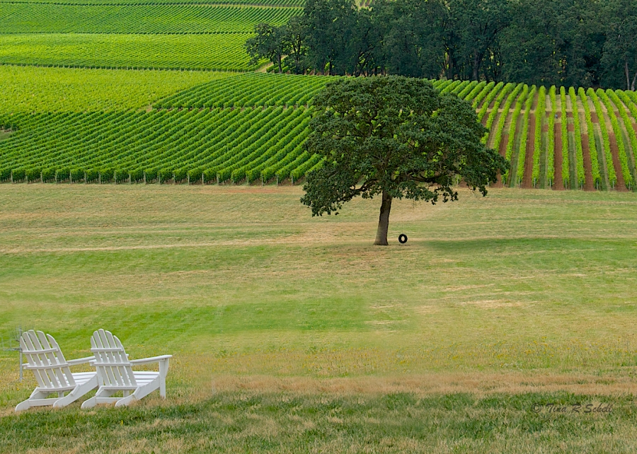 VINEYARD ON A SUMMER'S DAY