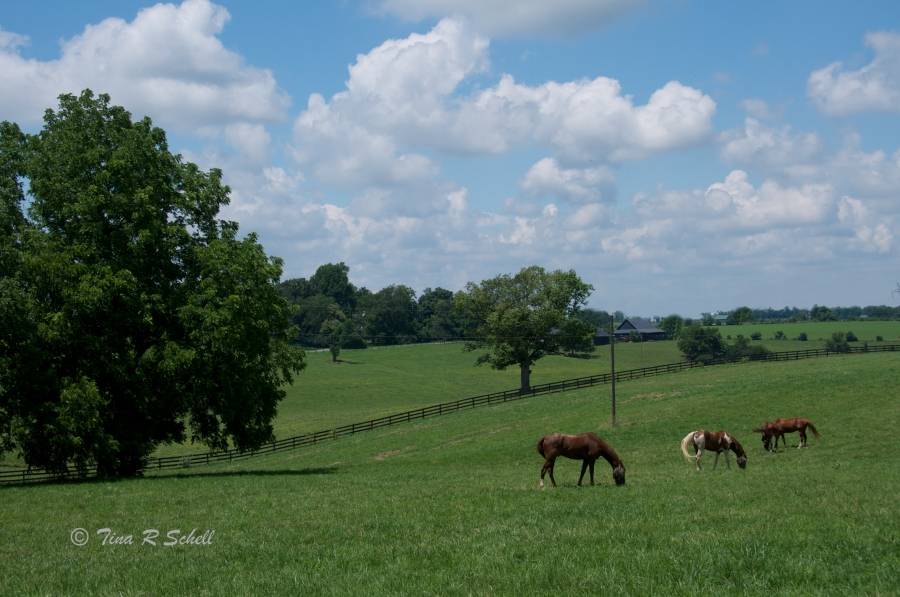 PEACEFUL GRAZING