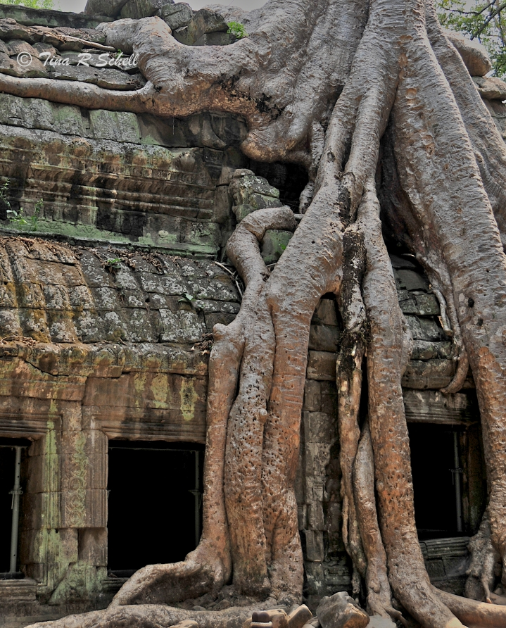 NATURE WINS, TA PROHM