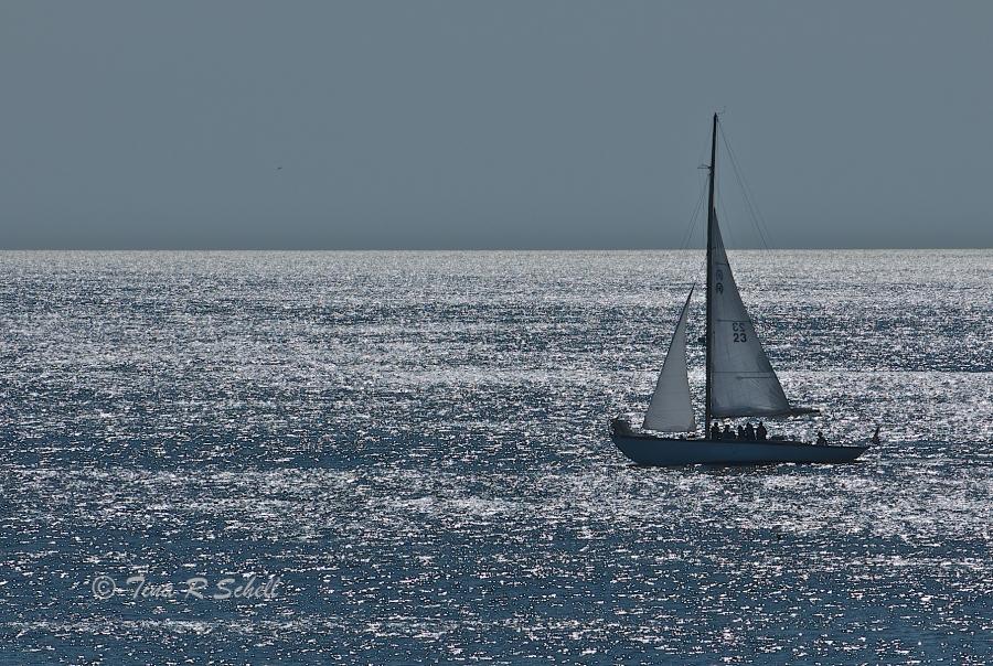SAILING ASHIMMERING SEA