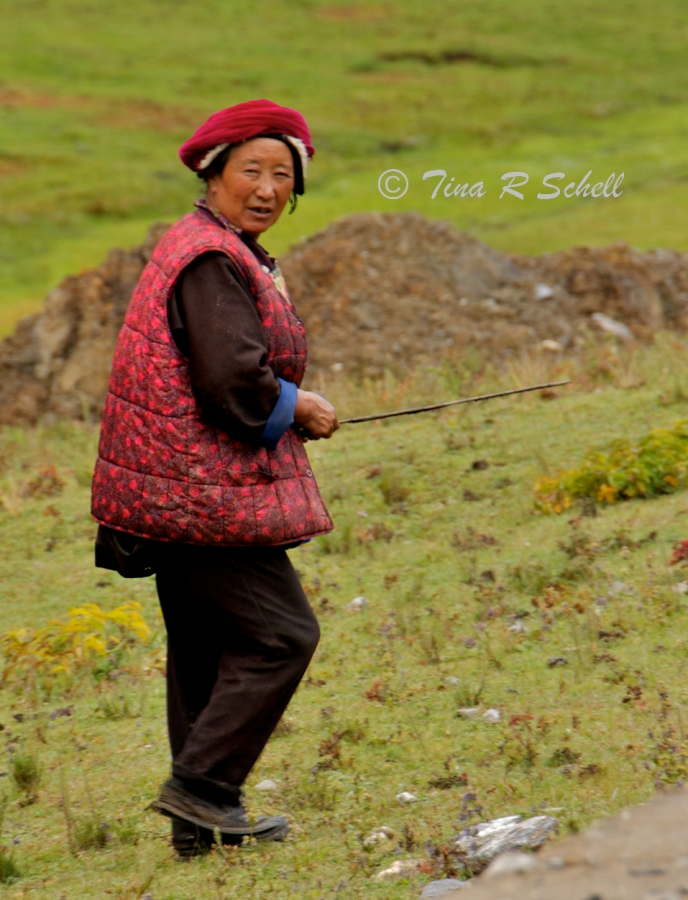 TIBETAN SHEPARDESS