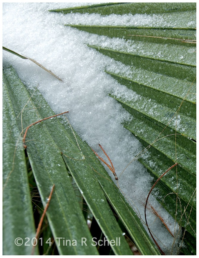 FROST IN THE FRONDS