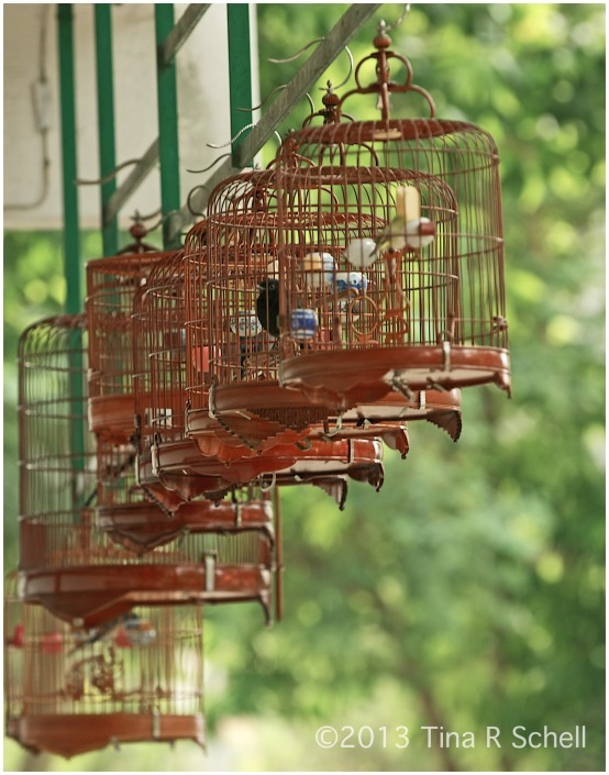 PRETTY CAGES