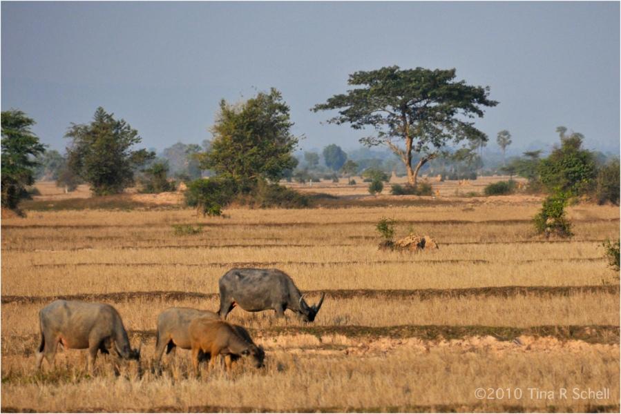 GENTLER TIMES, CAMBODIA