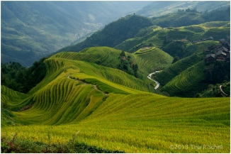 RICE TERRACES, LONGSHENG