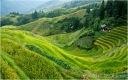 RICE FIELDS, LONGSHENG, CHINA