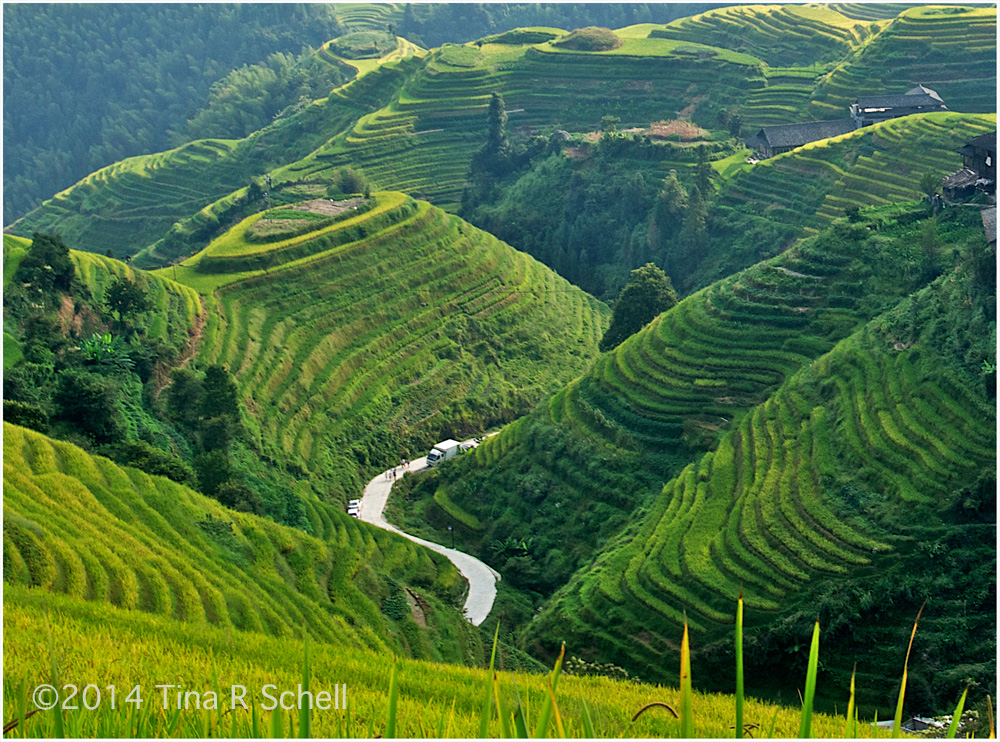 RICE FIELDS, LONGSHENGRICE FIELDS, LONGSHENG