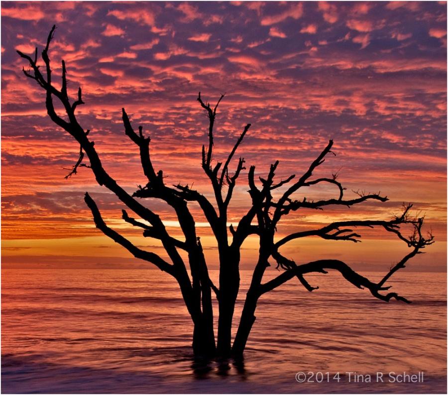 BONEYARD BEACH BEAUTY