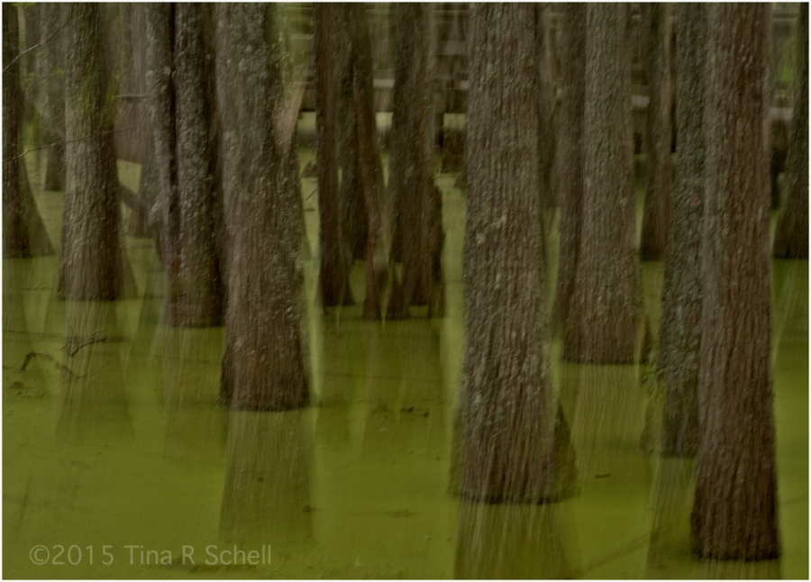 FLOATING SWAMP TREES