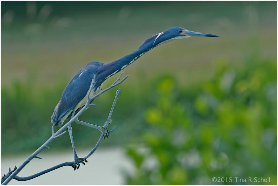 VIVID BLUE