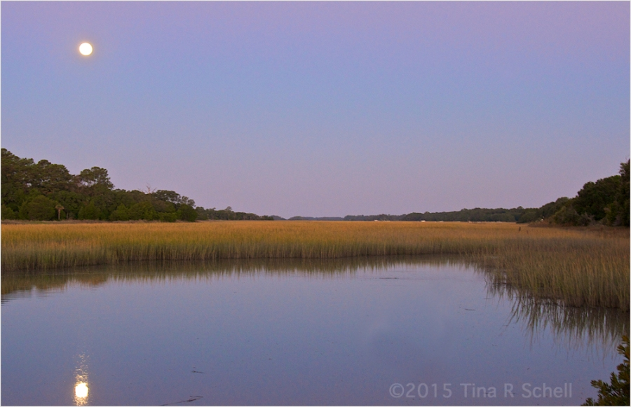 MOONRISE OVER THE MARSH