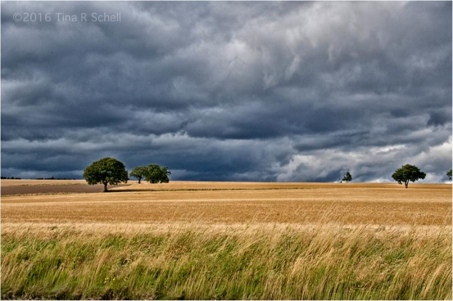 GOLDEN LIGHT, SCOTLAND