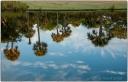 PALMETTO REFLECTIONS