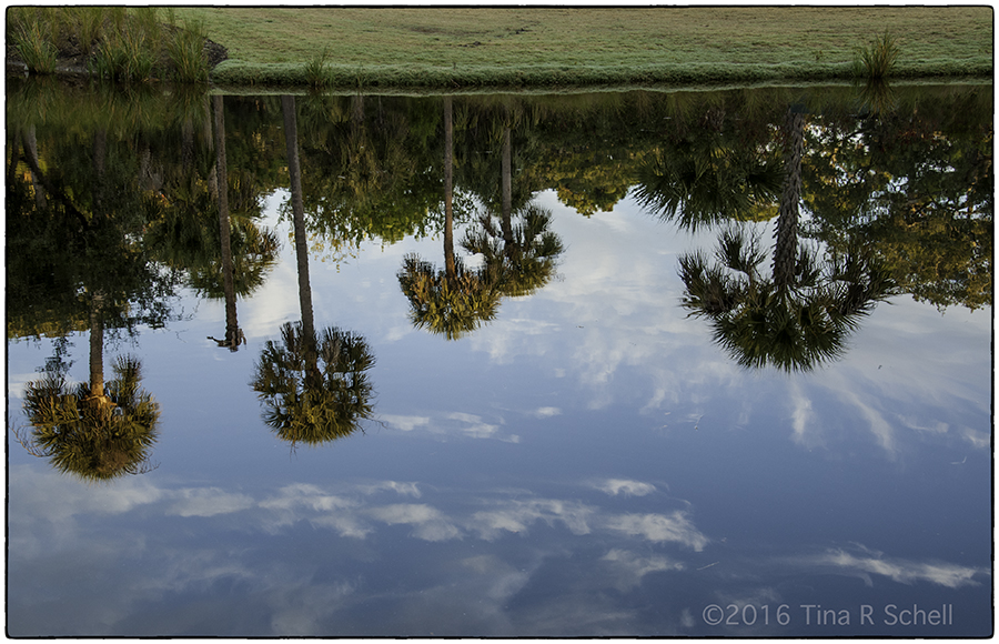 PALMETTO REFLECTIONS