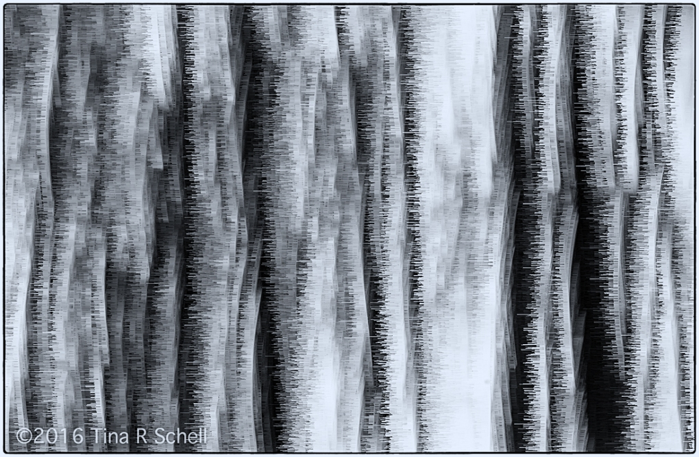 CHARCOAL FOREST