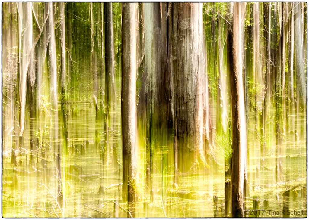 FOREST PAN