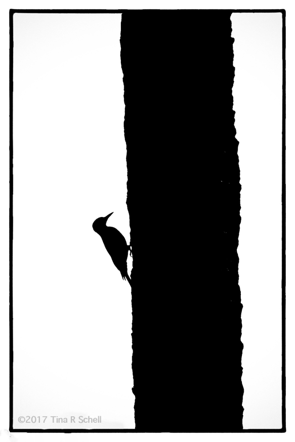 WOODPECKER SILHOUETTE