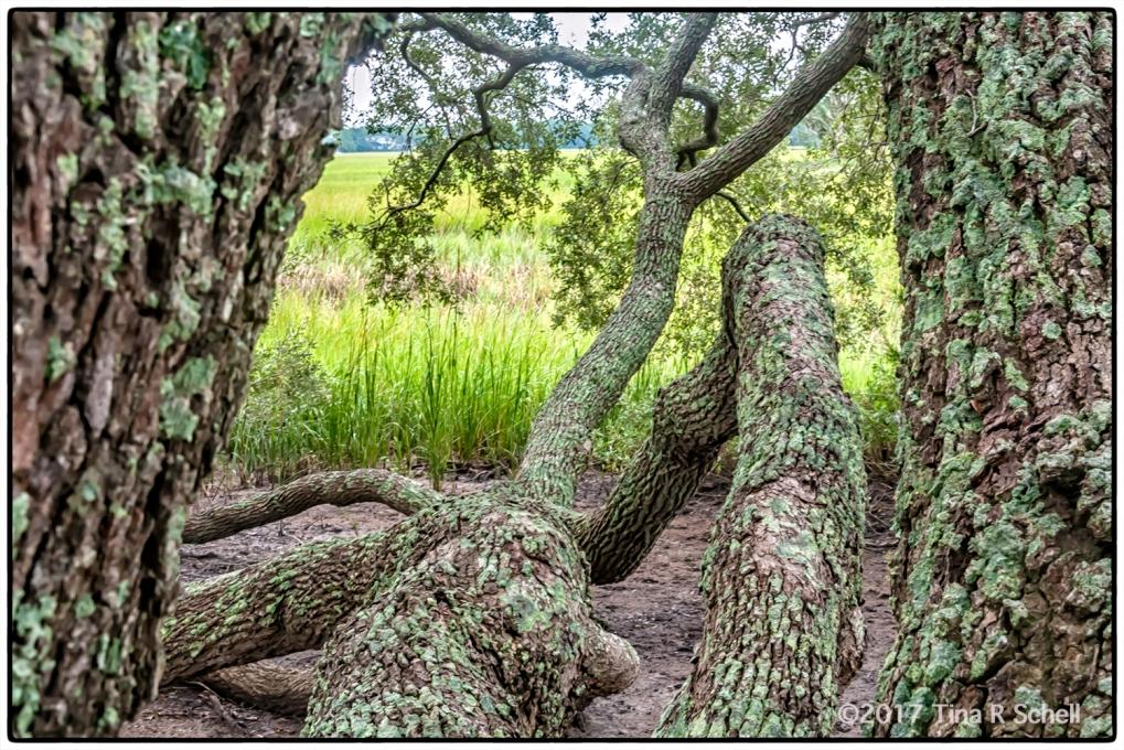 TREES THROUGH TREES