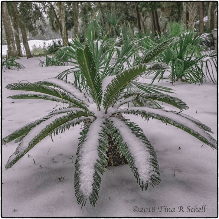 FREEZING FRONDS