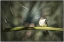 WEE BIRD