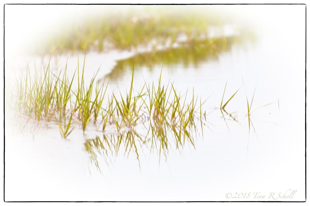 GRASSES OF GREEN