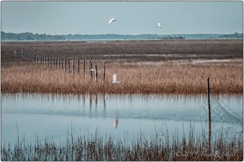 EGRETS AND FENCE