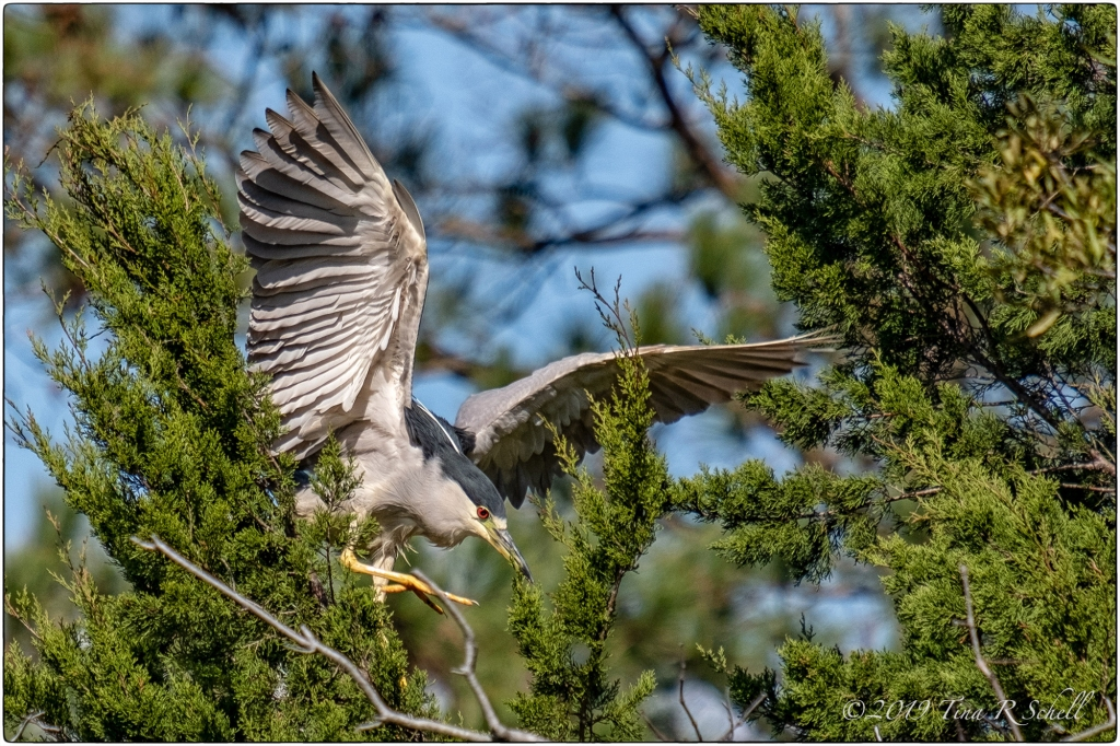 HIGH-FLYING HERON
