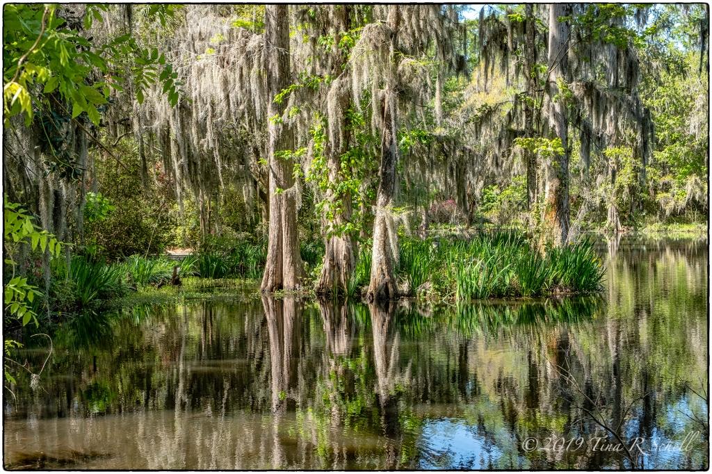 Magnolia Gardens swamp