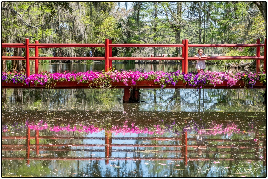 red bridge, magnolia gardens, small child, pink flowers