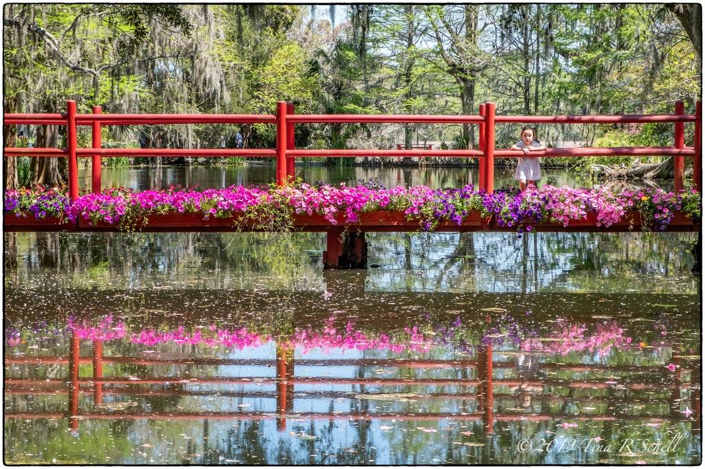 red bridge, magnolia gardens, small child, pink flowers