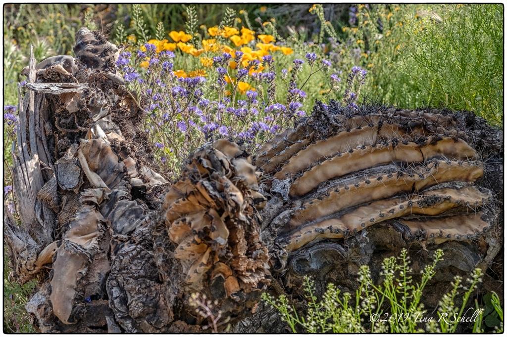 fallen cactus, flowers