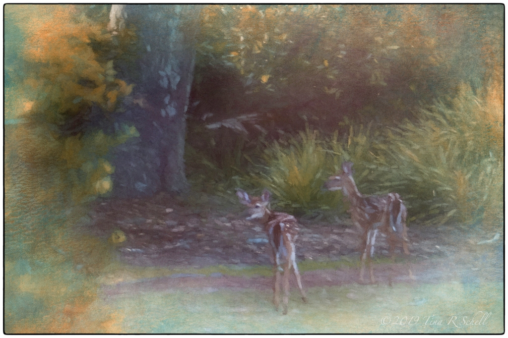 FAWNS IN THE FOREST