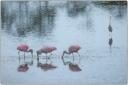 impressionist art - roseate spoonbills