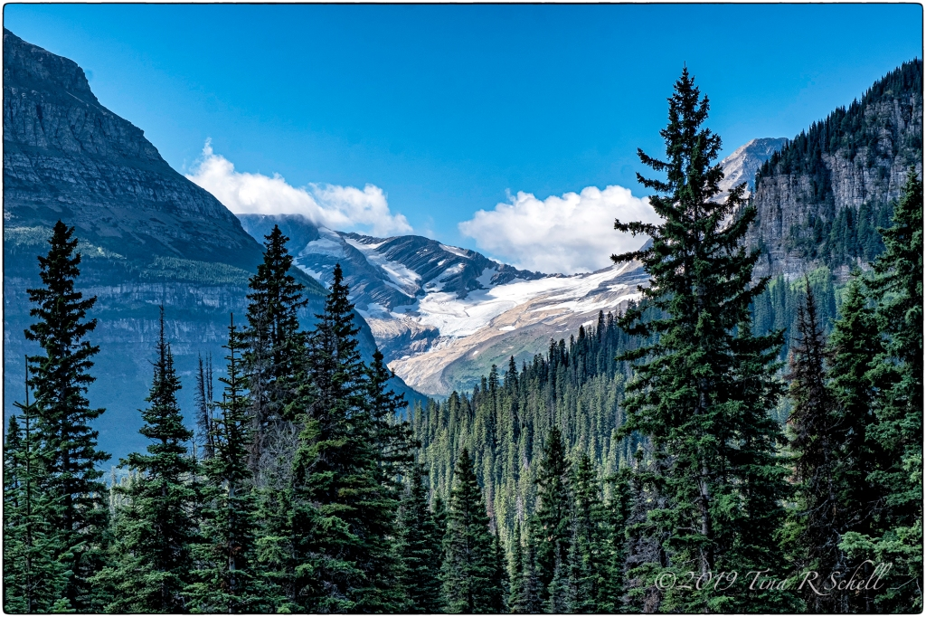 GLACIER, FIR TREES, MOUNTAINS, MONTANA, GLACIER NATIONAL PARK