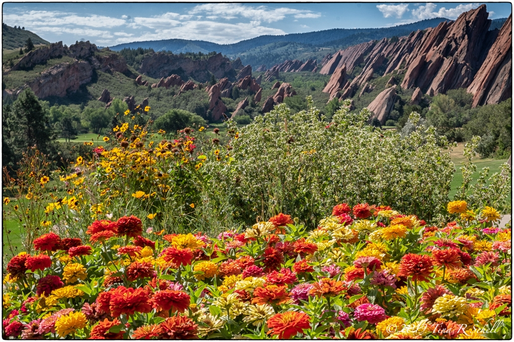 MOUNTAINS, HILLS, FLOWERS, RED AND ORANGE, COLORADO, ARROWHEAD
