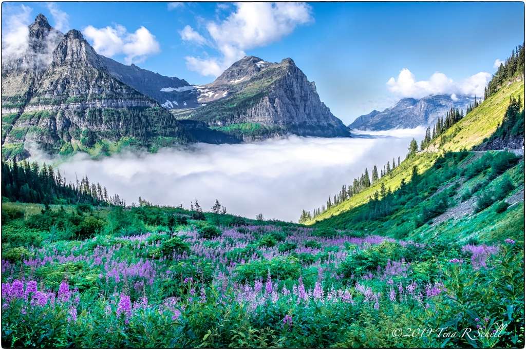 GLACIER NATIONAL PARK, MONTANA, CLOUDS, FLOWERS, MOUNTAINS