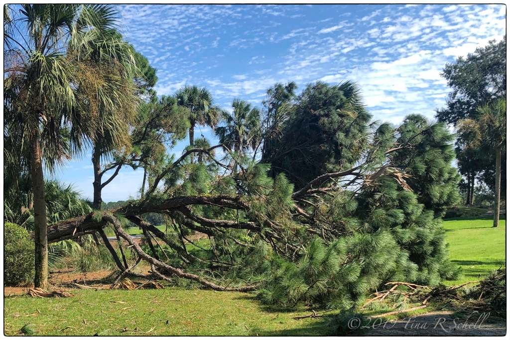 tree damage, Hurricane Dorian