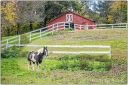 RED BARN, PAINTED PONY